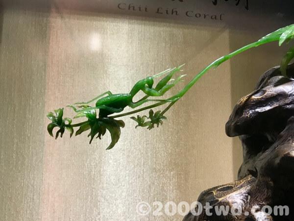 葉っぱと虫の彫刻